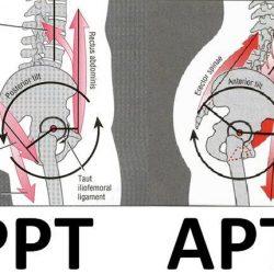 Quadril! Importante articulação, que auxilia e muito na estabilidade da coluna vertebral e posicionamento lombopélvico.