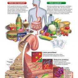 Disbiose Intestinal. Como o seu intestino interfere na saúde do seu corpo?