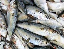 Matéria no Domingo Espetacular falando sobre os benefícios da sardinha